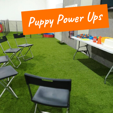 Puppy Talks Covering Socialisation, Biting, Calmness, Resource Guarding, Separation and Toilet Training