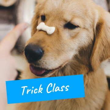 Dog Trick Training Classes